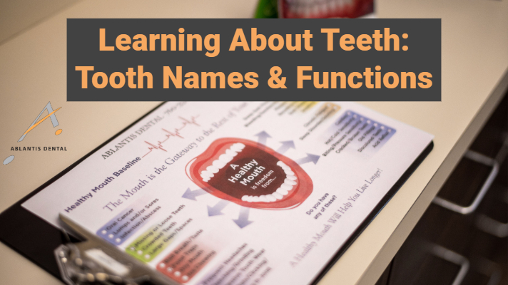 Learning About Teeth: Names & Functions